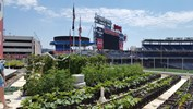 Nationals Park urban agriculture project