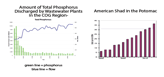 Phosphorus and Shad Charts